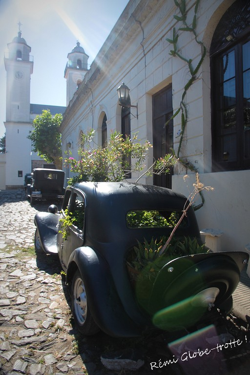 colonia-IMG_2900