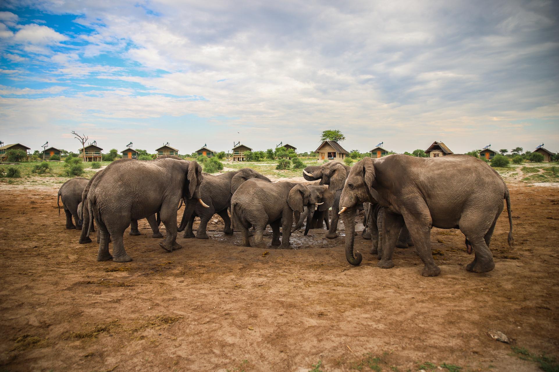 05 - Elephant Sands-1689